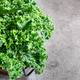 Fresh curly green Kale - PhotoDune Item for Sale