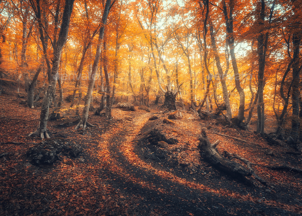 Autumn forest with trail in fog. Foggy trees in fall - Stock Photo - Images
