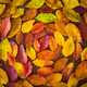 Background of colorful autumn leaves - PhotoDune Item for Sale