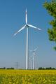 Wind wheels in a rapeseed field  - PhotoDune Item for Sale