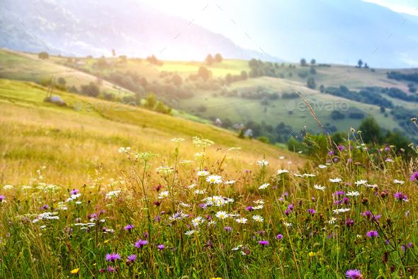 Beautiful summer sunrise in the Carpathian mountains. Ukraine, E - Stock Photo - Images