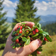 Female hand with cowberries twigs with berries and leaves on mou - PhotoDune Item for Sale