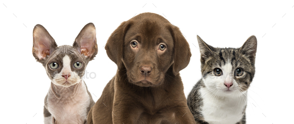 Close-up of cats and dog, isolated on white - Stock Photo - Images