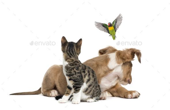 Cat, dog and bird, isloated on white - Stock Photo - Images