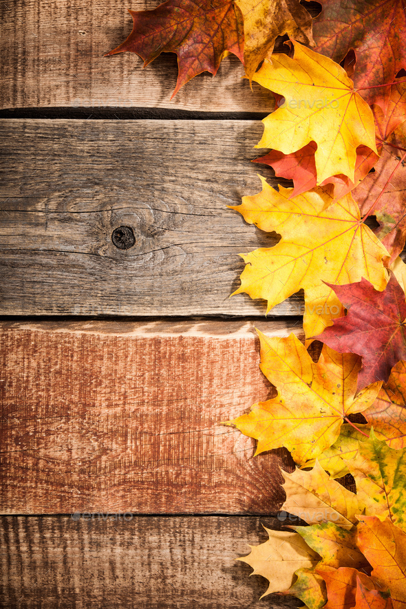Autumn background with maple leaves - Stock Photo - Images