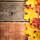 Autumn background with maple leaves - PhotoDune Item for Sale