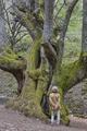 Woman enjoying old century chestnut tree on Ambroz valley. Vertical - PhotoDune Item for Sale
