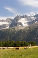 Two lamas in the field in Alps, France - PhotoDune Item for Sale