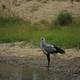 secretary bird - PhotoDune Item for Sale