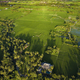 Rice fields,Bali,Indonesia - PhotoDune Item for Sale