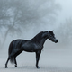 Beautiful black miniature horse standing in fog. - PhotoDune Item for Sale
