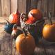 Pumpkins - PhotoDune Item for Sale