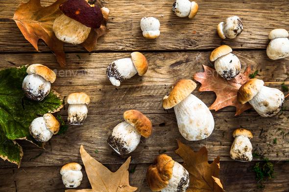 Mushrooms - Stock Photo - Images