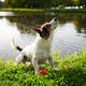 Funny dog shaking off water - PhotoDune Item for Sale