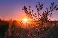 Autumn Wild Flowers In Sunset Sunrise Sunlight. - PhotoDune Item for Sale