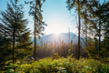 Tatra National Park, Poland. Sunrise Above Summer Mountain And F - PhotoDune Item for Sale