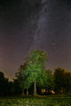 Milky Way Galaxy In Night Starry Sky Above Tree In Summer Forest - PhotoDune Item for Sale