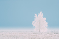 Lonely Tree In Snow-covered Field In Winter Frosty Day. Fluffy T - PhotoDune Item for Sale