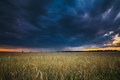 Summer Sunset Evening Above Countryside Rural Wheat Field Landsc - PhotoDune Item for Sale