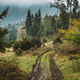 Borjomi, Georgia. Mountains Road Path Way Lane In Forest In Autu - PhotoDune Item for Sale