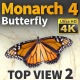 Butterfly Monarch 4 - VideoHive Item for Sale