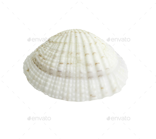 Scallop seashell isolated on white 6 - Stock Photo - Images