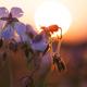Summer field of flowers - PhotoDune Item for Sale