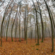 Fog in beechwood in autumn - PhotoDune Item for Sale