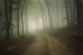 Road through the haunted mysterious woods with fog - PhotoDune Item for Sale