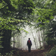 man hiking on misty forest path with green foliage and lush vege - PhotoDune Item for Sale