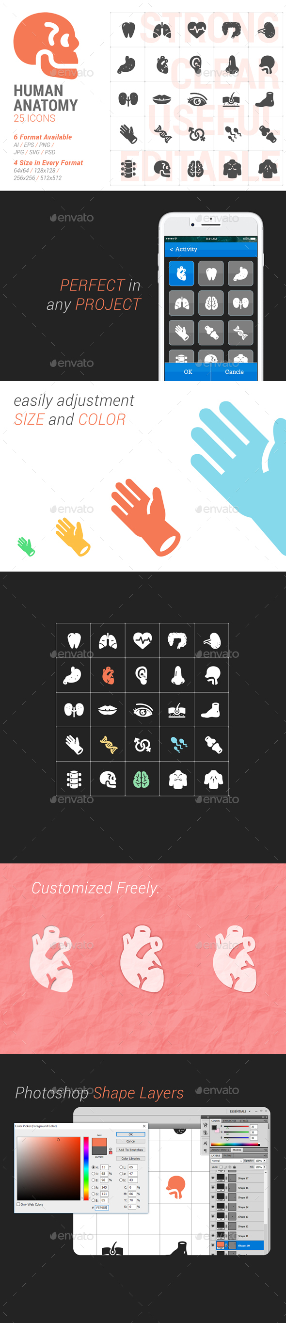Human Anatomy Filled Icon - Icons