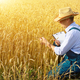 Farmer with clipboard inspecting crop at wheat field - PhotoDune Item for Sale