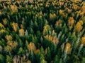 Aerial view of autumn forest. Fall landscape with red, yellow and green trees. - PhotoDune Item for Sale