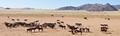 Wild horses of the namib panorama - PhotoDune Item for Sale