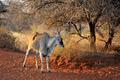 Unicorn Eland - PhotoDune Item for Sale