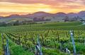 Vineyards at sunset in California, USA - PhotoDune Item for Sale