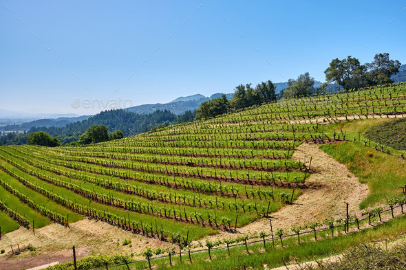 Vineyards in California, USA - Stock Photo - Images