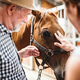 Free Download A close-up of senior couple petting a horse. Nulled