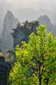 Zhangjiajie mountains, China - PhotoDune Item for Sale