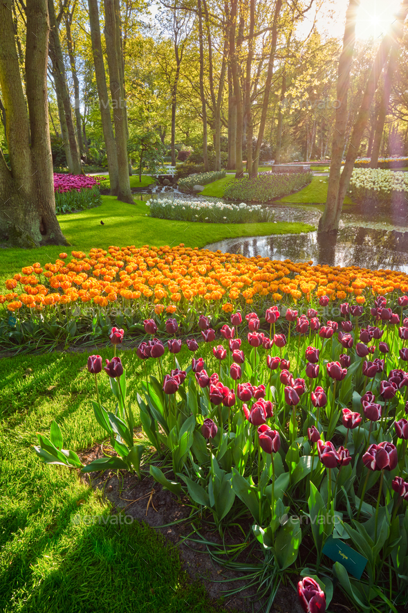 Keukenhof flower garden. Lisse, the Netherlands. - Stock Photo - Images