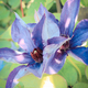 Blooming clematis with green leaves in sunny garden - PhotoDune Item for Sale