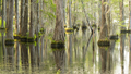 Smooth Water Reflects Cypress Trees in Swamp Marsh Lake - PhotoDune Item for Sale
