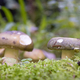 two mushrooms - PhotoDune Item for Sale