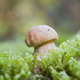 brown boletus growing - PhotoDune Item for Sale