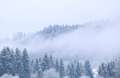 winter coniferous forest in fog - PhotoDune Item for Sale