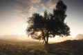 beautiful misty sunrise behind tree - PhotoDune Item for Sale
