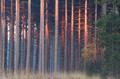 red sunrise light on trees in autumn - PhotoDune Item for Sale