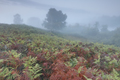 green and red fern leaves on hill in fog - PhotoDune Item for Sale