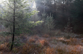 morning sunshine in autumn coniferous forest - PhotoDune Item for Sale