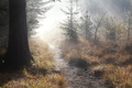 walk path in misty autumn forest - PhotoDune Item for Sale